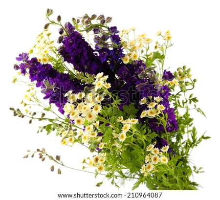 Beautiful purple flowers isolated on white