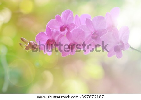 Beautiful purple flowers on a bokeh background,Orchids purple Is considered the queen of flowers in Thailand, fill color filter pastel gradient tone.