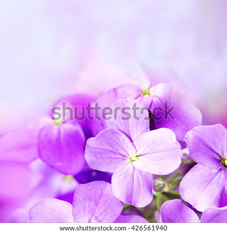 beautiful purple flowers on bokeh background