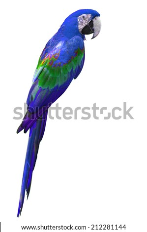 beautiful purple macaw isolated on white background - stock photo