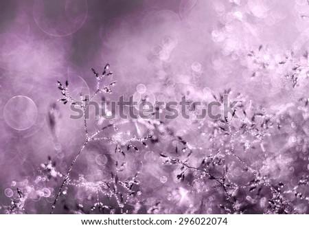Beautiful purple morning dew  - stock photo