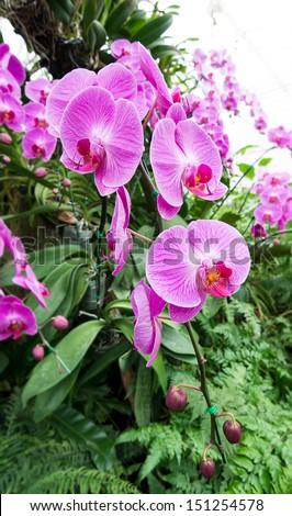 beautiful purple orchid flower - stock photo