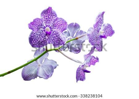 Beautiful purple orchid flower isolated on white background - phalaenopsis - stock photo