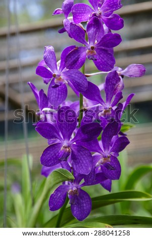 Beautiful purple orchid flowers - stock photo