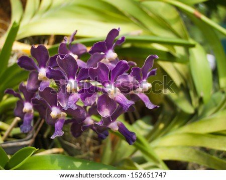 Beautiful purple orchid flowers bloom in flower garden.