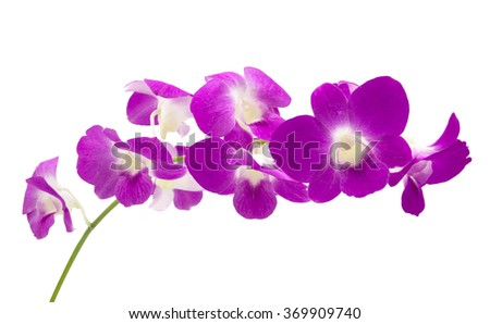 beautiful purple orchid flowers cluster isolated on white background - stock photo