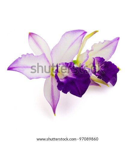 Beautiful purple orchid isolated on white background - stock photo
