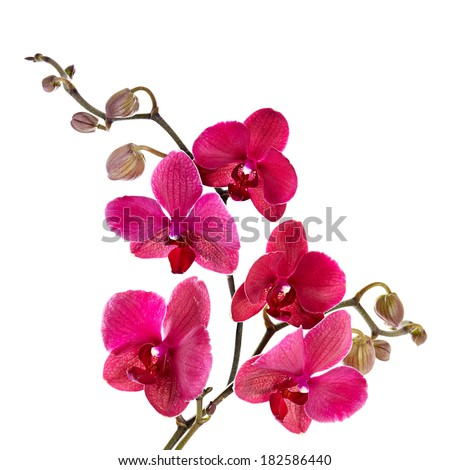 Beautiful purple orchid on a white background - stock photo