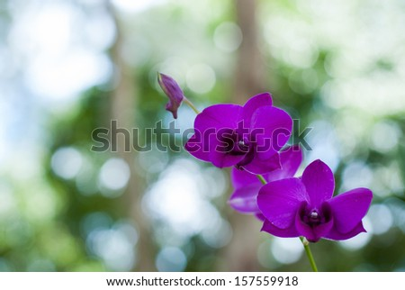 Beautiful purple orchid on the tree with a green background.