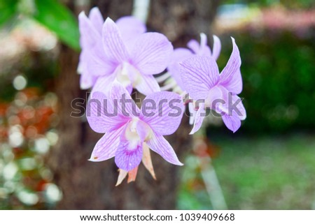 Beautiful purple orchids on a branch with blurry green leaf in the background