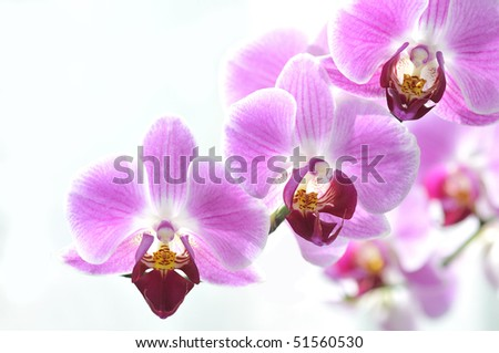 Beautiful purple Phalaenopsis against a white background - stock photo