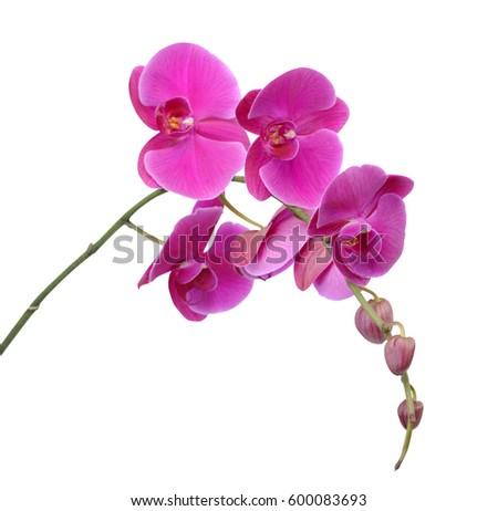 orchid flower stock images, royaltyfree images  vectors, Beautiful flower