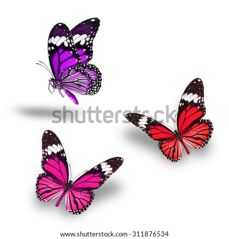 Beautiful Purple Pink Red butterfly flying up
