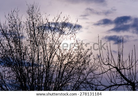 Beautiful purple sky in spring sunset time - stock photo