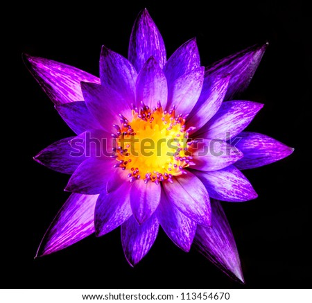 Beautiful purple waterlilly or lotus on water and black background - stock photo