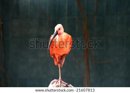 beautiful quiet bird - stock photo