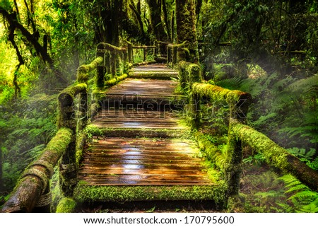 Beautiful rain forest at ang ka nature trail in doi inthanon national park, Thailand - stock photo
