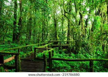 Beautiful rain forest at ang ka nature trail in doi inthanon national park, Thailand