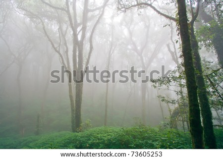 Beautiful Rain Forest with Fog (Doi Inthanon National Park), Thailand