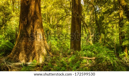 Beautiful Rainforest with Large Tree - stock photo