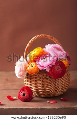 beautiful ranunculus flowers in basket  - stock photo