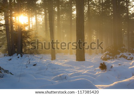 Beautiful rays of sunlight shine through the trees on a cold sunset in the winter. - stock photo