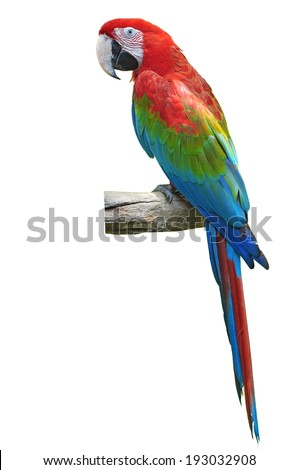 beautiful red and green macaw isolated on white background