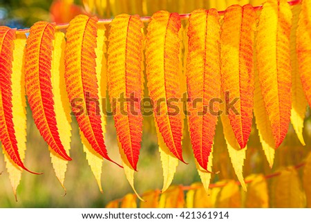 Beautiful red and yellow autumn leaves in detail - stock photo