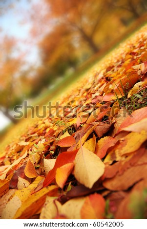 Beautiful red and yellow leaves covering autumn park. Closeup. - stock photo