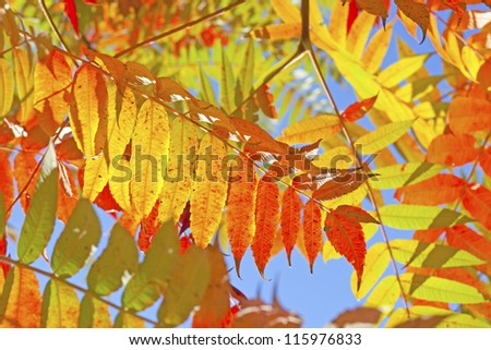 beautiful red autumn leaf over the blue sky