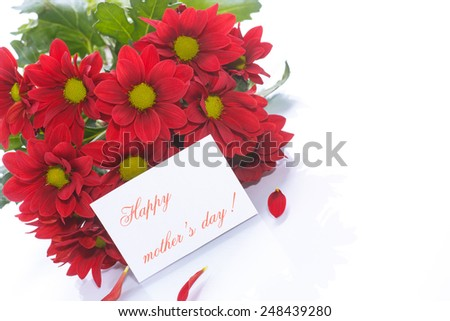 beautiful red blooming chrysanthemum on a white background - stock photo