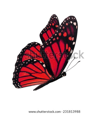 Beautiful red butterfly flying isolated on white background - stock photo