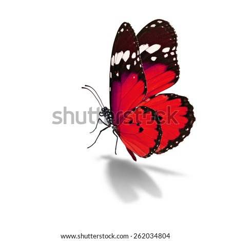 Beautiful red butterfly isolated on white background - stock photo