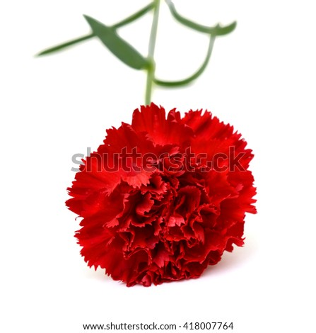 beautiful red carnation flower isolated on white background - stock photo