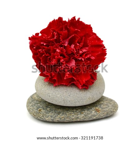 Beautiful red carnations flower isolated on white background - stock photo