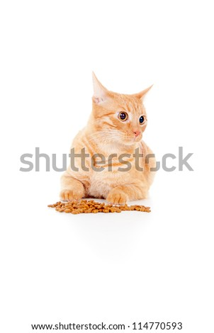 beautiful red cat lying near food isolated