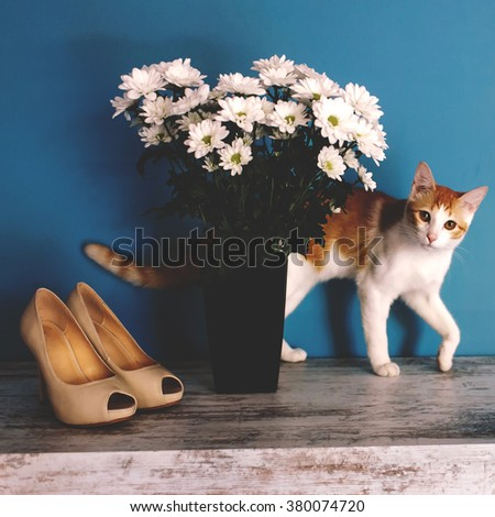 Beautiful red cat peeking out from behind a bouquet of white asters in high black vase. Women's fashion high-heeled shoes, pet and autumn bouquet of asters. - stock photo