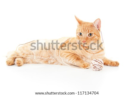 beautiful red cat playing with a ball of yarn - stock photo