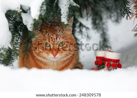 Beautiful red cat under fir tree on white snow background - stock photo