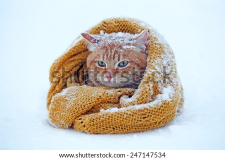 Beautiful red cat wrapped in scarf on snow background - stock photo