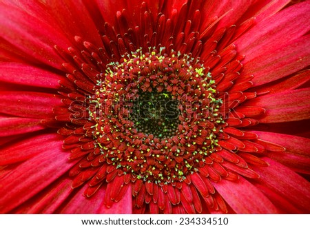 beautiful red flower close-up - stock photo