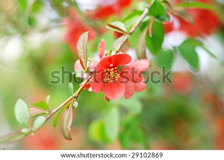 Beautiful red flower (shallow DOF)