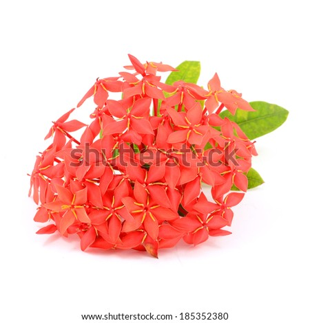 Beautiful Red flower spike isolated on white background - stock photo