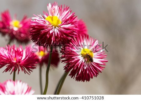 Beautiful red flowers background blur selective focus - stock photo