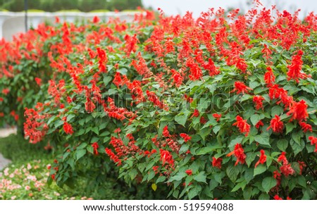 Beautiful red flowers on a cloudy day. Natural background with red flowers in a garden.