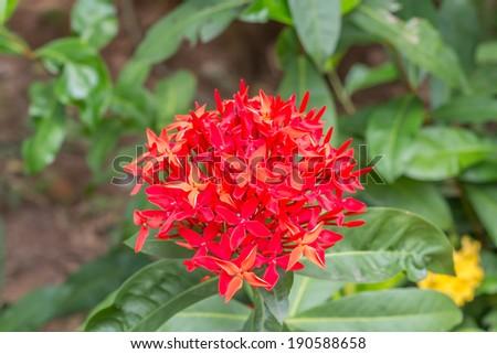 Beautiful red flowers spike - stock photo