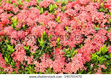 Beautiful red flowers spike. Into the background - stock photo
