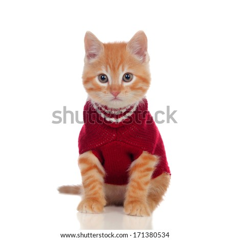 Beautiful red-haired kitten wearing a wool sweater isolated on white background - stock photo