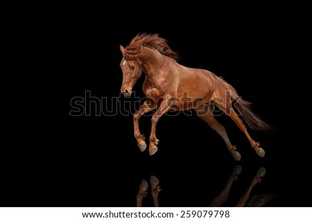 Beautiful red horse galloping in a phase jump developing mane. Thoroughbred stallion isolated on black background - stock photo