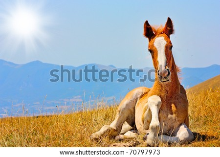 Beautiful red horse taken in Italian mountains - the Apennines - stock photo